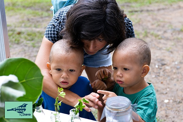 Small SXM-ers meet checkered swallowtail caterpillars at the Bug Discovery Station. (Photo by Chemaine Petit-Booi)