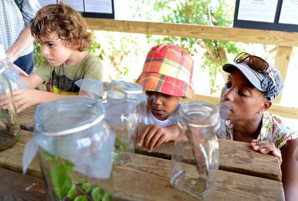 The Endemic Animal Discovery Station's live animal displays included four species found only on St. Martin. (Photo by Marc Petrelluzzi)