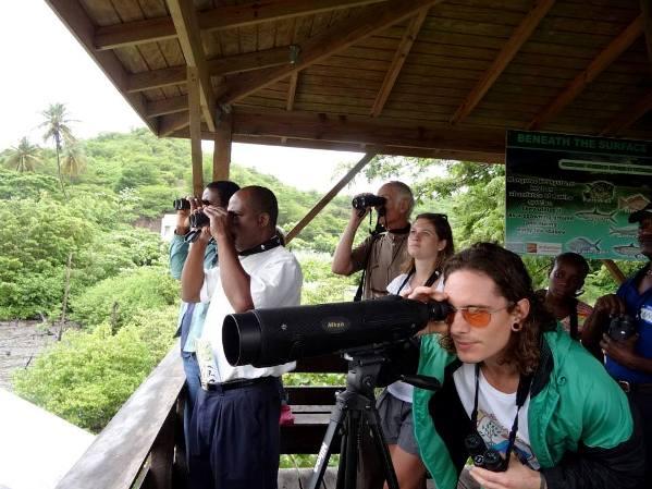 Bird Watching. Photo courtesy caribbeanhorizons.com