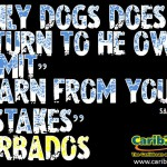 Only dogs does return to he own vomit – Barbadian Saying #1