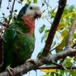 Discover Birds of the Bahamas