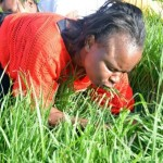 Grass eaters experience healing powers