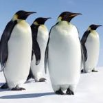 Today is…Penguin Awareness Day