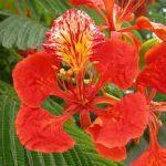 Meghan's Caribbean Flowers