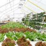 Climate Resistant Greenhouse Farms launched in Caribbean